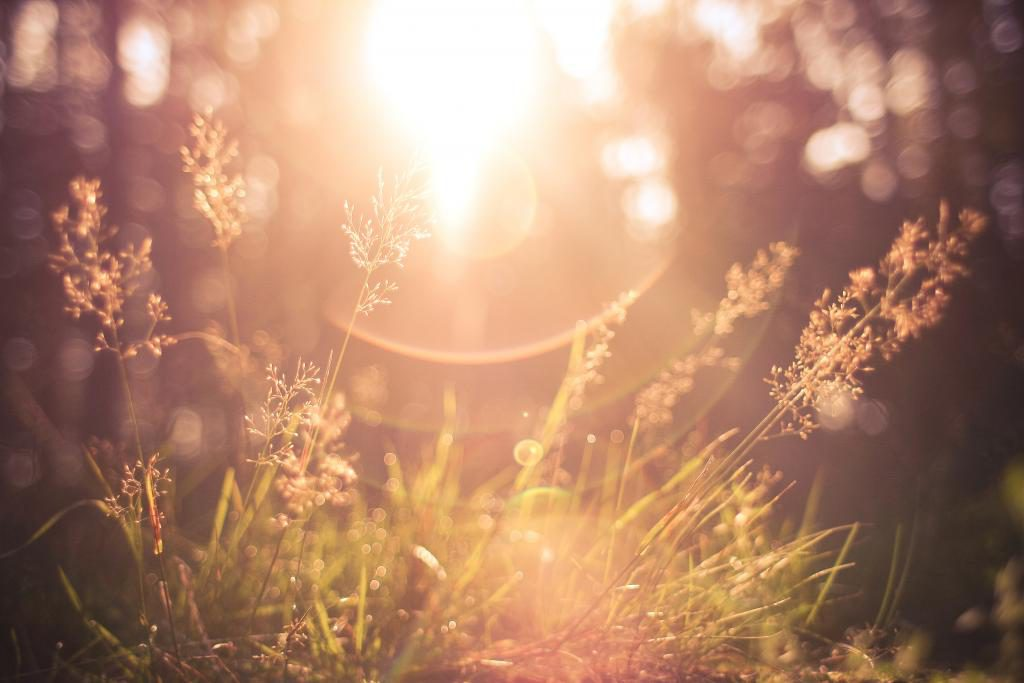 This image has an empty alt attribute; its file name is grass-sunlight-1024x683.jpg